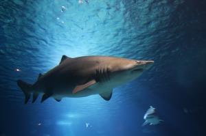 shark-220748_1280